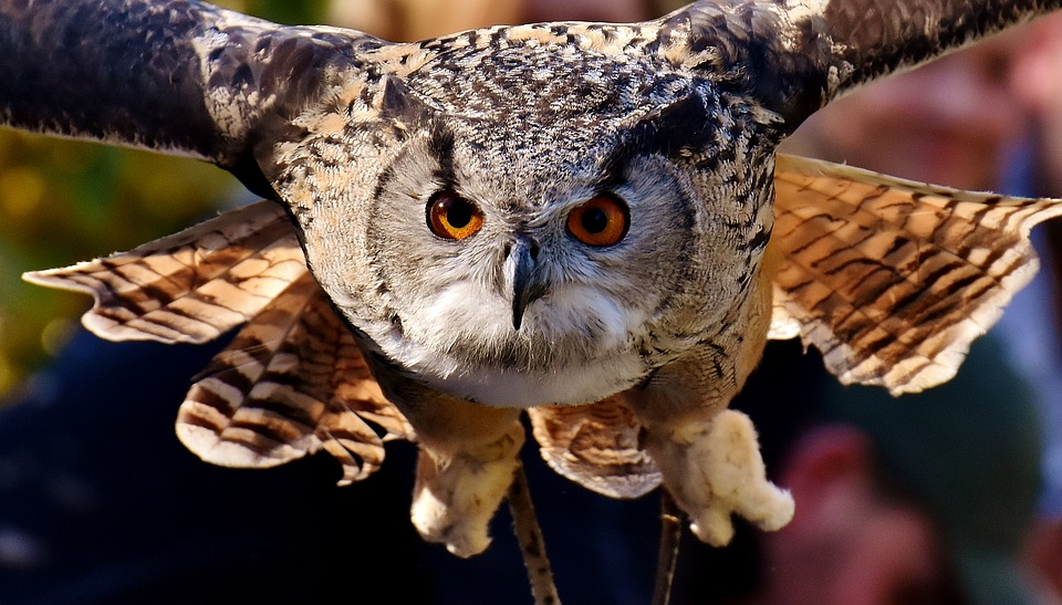 owl-2903707_960_720